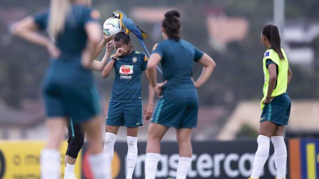Insólito: Arara interrompe treino da Seleção feminina do Brasil