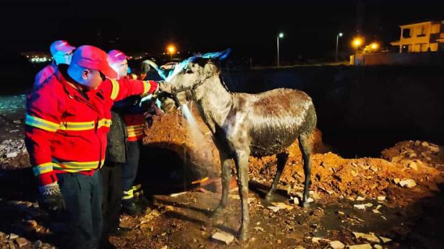 Bombeiros de Lagos salvam burro de vala com lama. E há imagens