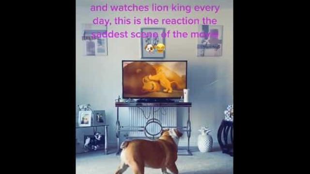 Cão fã do 'Rei Leão' reage de forme emotiva à morte de Mufasa