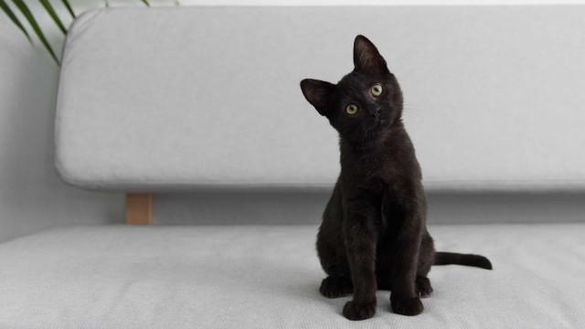 Gatos pretos: Superstições e simbologia (miau!)