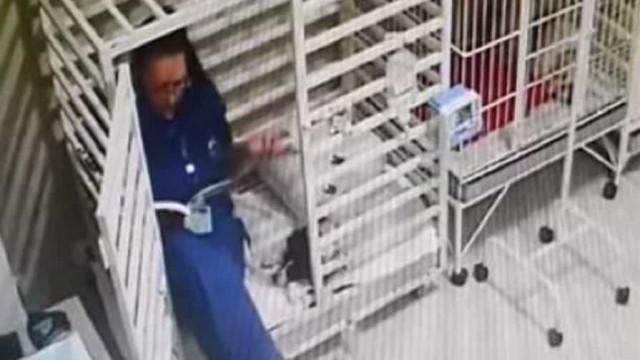 Veterinária 'apanhada' em jaula a ler para cão. Eis as (bonitas) imagens