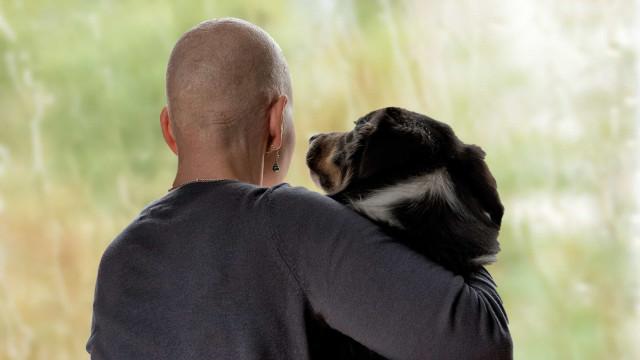 Detetar o cancro e outras coisas incríveis que os cães conseguem fazer