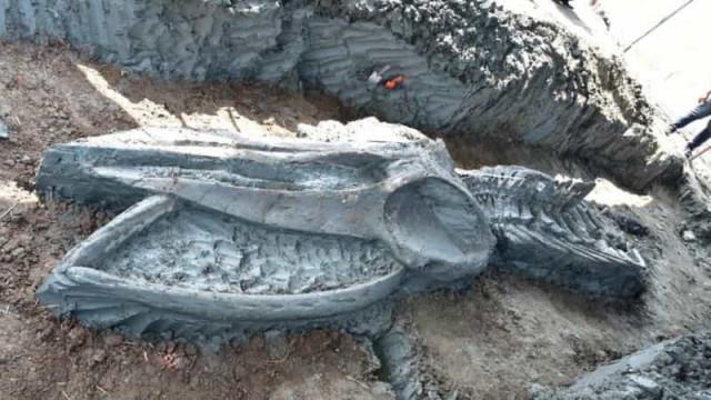 Esqueleto raro de baleia descoberto na Tailândia