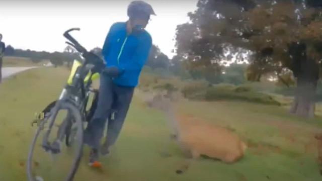 Homem multado após ataque do seu cão levar a abate de cervo