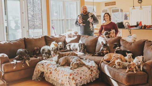 Casal cria labirinto na neve para os seus 21 cães