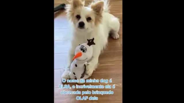 Amizade improvável? Cadela delira com personagem da Disney