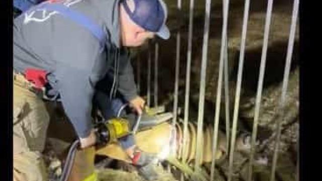 Bombeiros usam ferramenta hidráulica para resgatar veado nos EUA