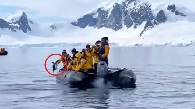 Pinguim perseguido por baleias esfomeadas dá salto que lhe salva a vida