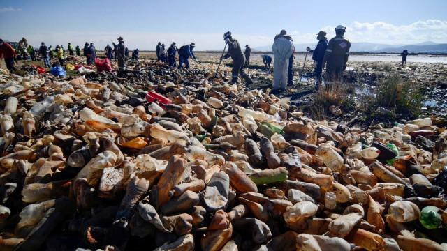 Feito de Plástico. Lago Uru Uru na Bolívia tem mais lixo do que água
