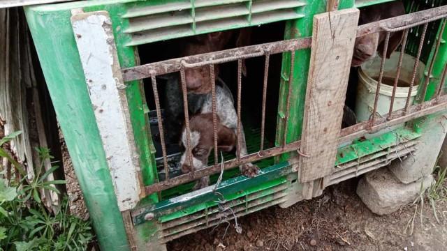 Resgatados 25 cães de canil ilegal e sem condições em Castelo Branco