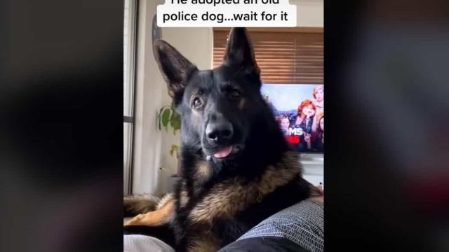 Ex-cão da polícia torna-se viral com reação espontânea à palavra cocaína