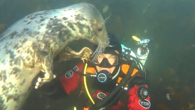 Foca interage com mergulhador e segura-lhe a mão