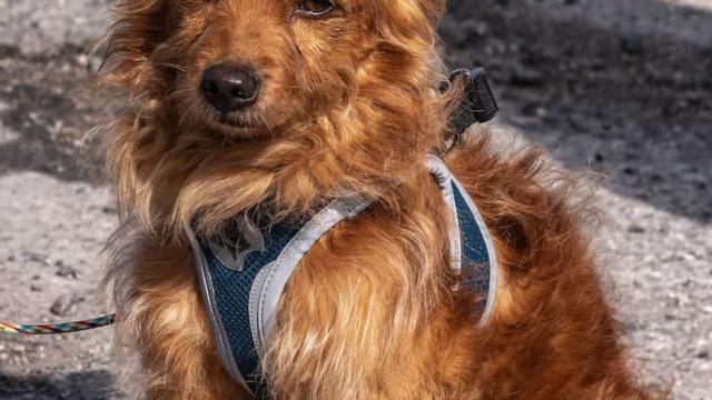 'Sal', o cão resgatado após queda ao rio Tejo já tem uma nova família