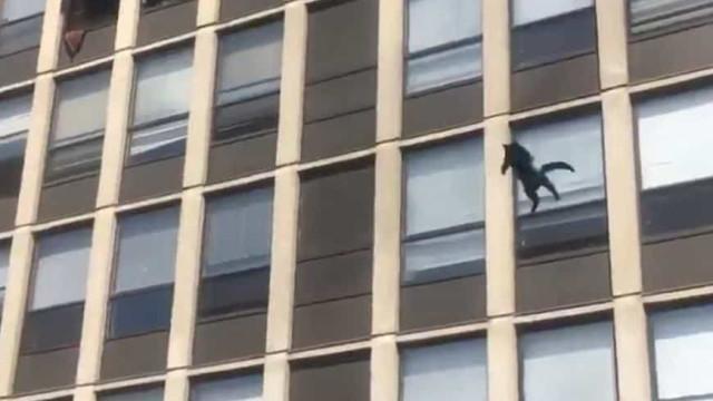 Gato salta de 5.º andar de prédio em chamas e sobrevive sem ferimentos