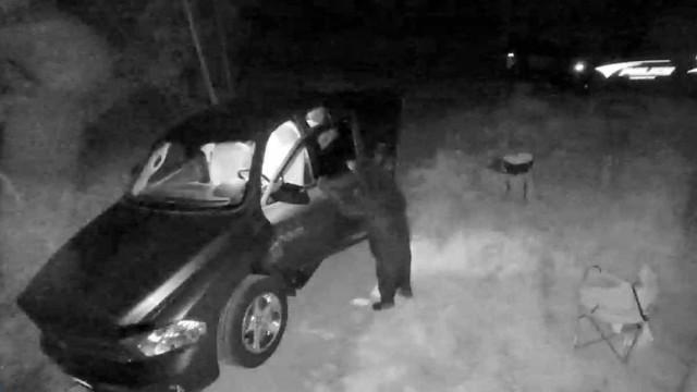 Urso apanhado em vídeo a 'assaltar' carro em New Hampshire