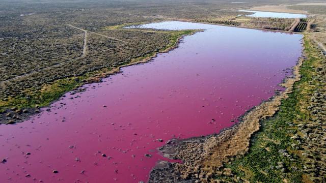 Poluição 'pinta' lagoa em tons de rosa na Argentina