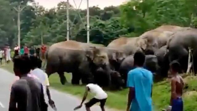Homem morre espezinhado na Índia por elefante que se sentiu provocado