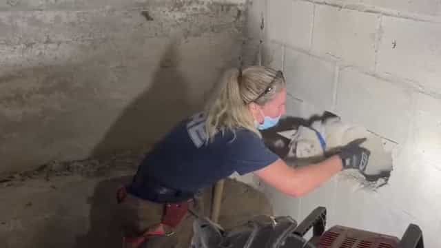Cão desaparecido há 5 dias encontrado preso em parede