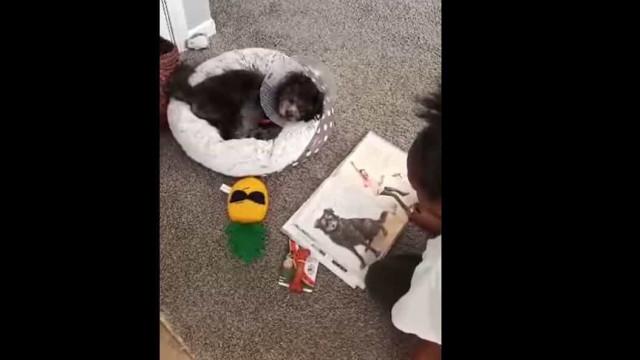 """Criança lê história a cadela para fazê-la """"sentir melhor"""" após cirurgia"""