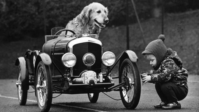 Cães a andar de carro (sim, leu bem!)