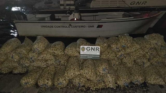 Apreendidas nove toneladas de berbigão na Ria Formosa sem tamanho mínimo