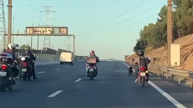 """""""Sorriso de orelha a orelha"""". Grupo de motociclistas salva cão na A1"""
