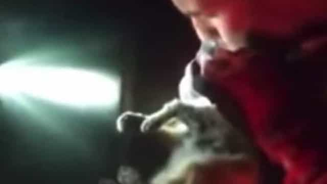 Militar salva gato em La Palma com respiração boca a boca