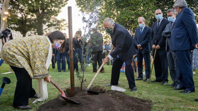 'Árvore da Memória' plantada para evocar memória das vítimas da Covid-19