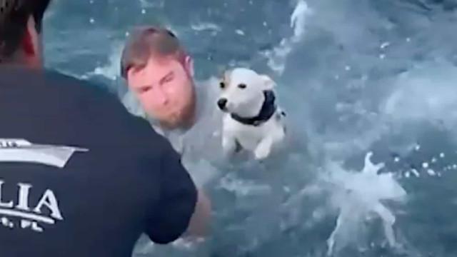 Resgatado cão perdido no mar a mais de um metro da costa da Flórida