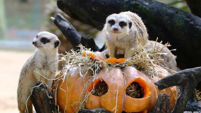 O Halloween mais assustador vive-se no Jardim Zoológico de Lisboa