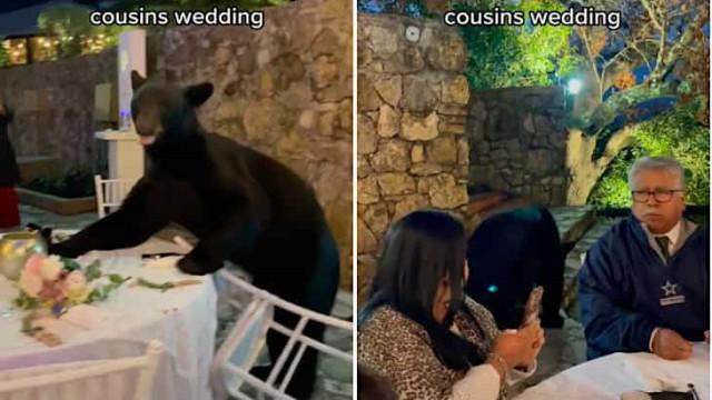 Urso invade copo d'água de casamento no México e prova um pouco de tudo