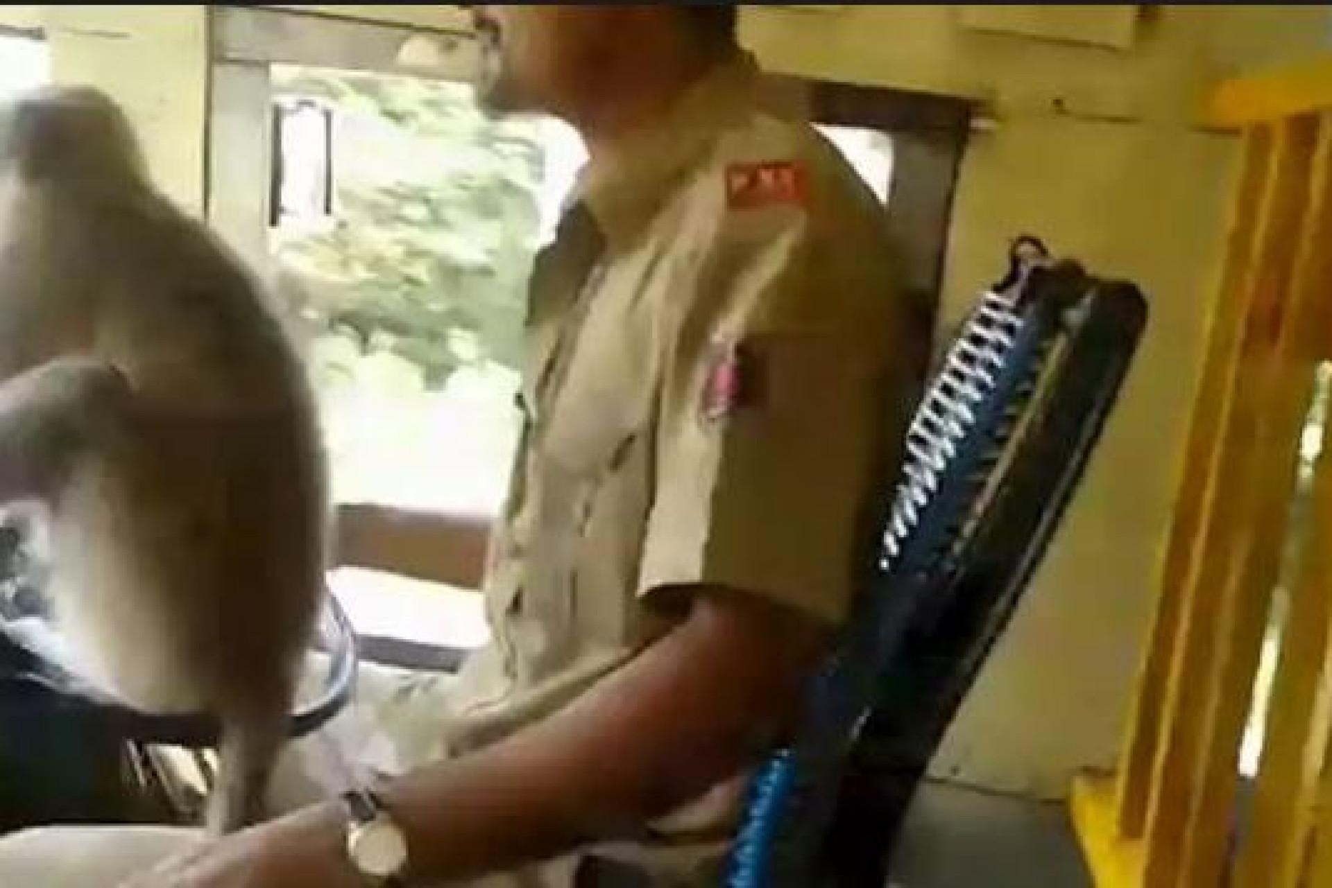 Macaco conduz autocarro na Índia