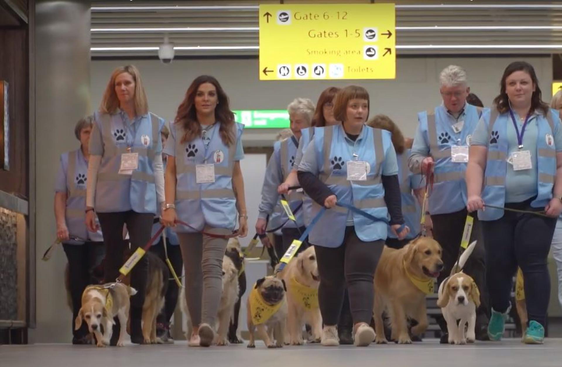 Tem medo de voar? Neste aeroporto há uma tripulação canina para ajudar