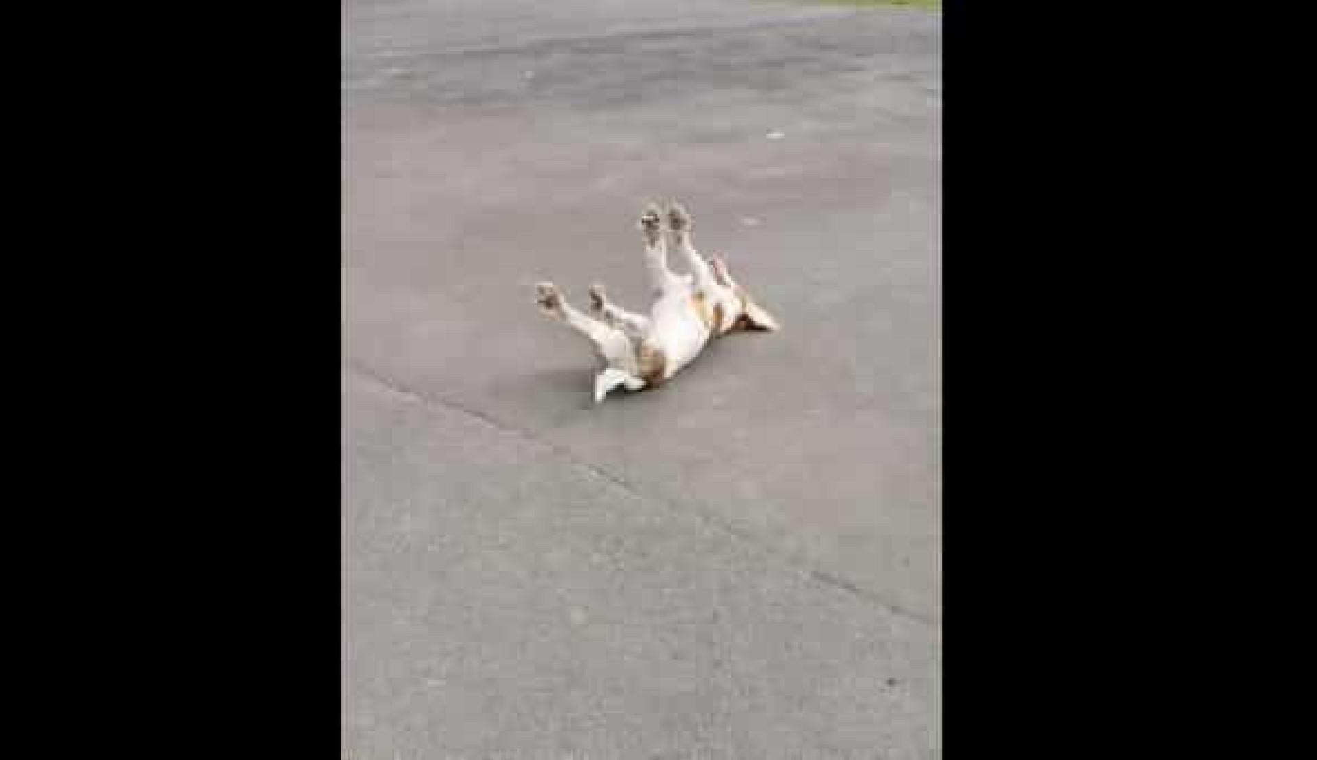 Este cão desmaia sempre que se entusiasma demais