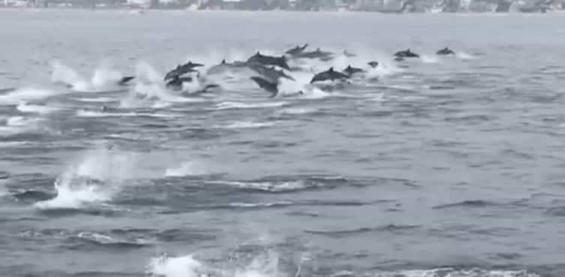 Grupo de mais de 100 golfinhos acompanhou barco na California