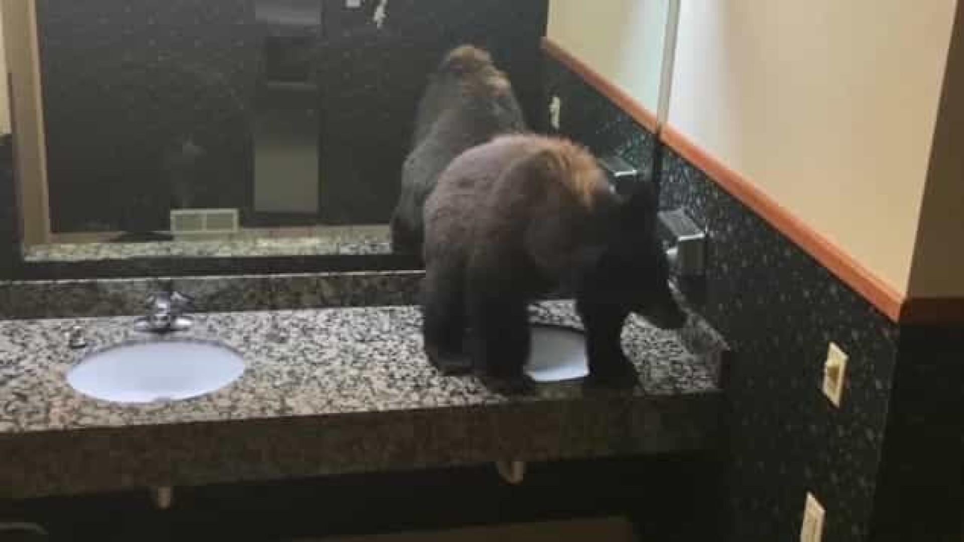 Urso apanhado a 'relaxar' em casa de banho de hotel nos EUA