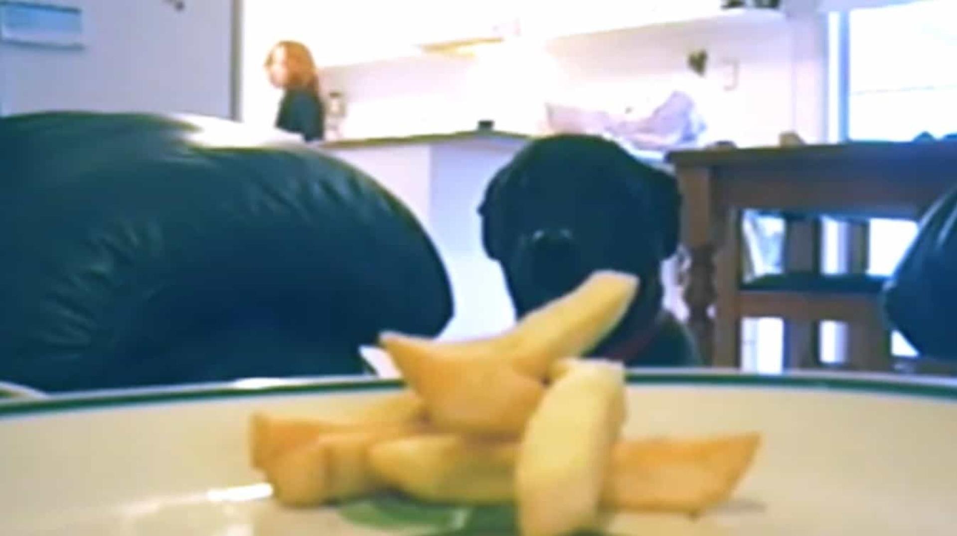 Cão espera que dona saia para roubar batata. Imagens adoráveis