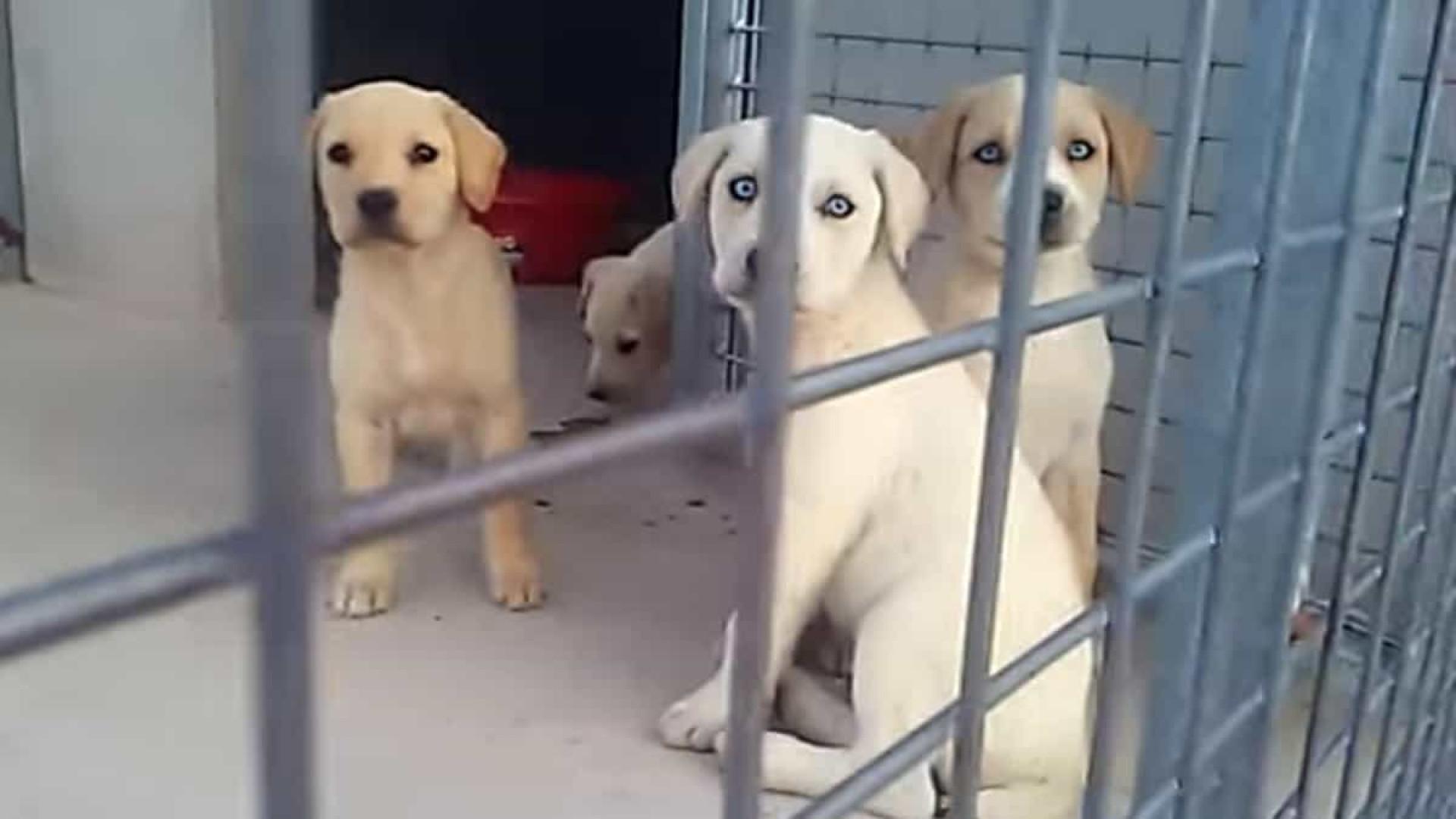 Cachorros enterrados vivos em Espanha foram resgatados. Eis as imagens