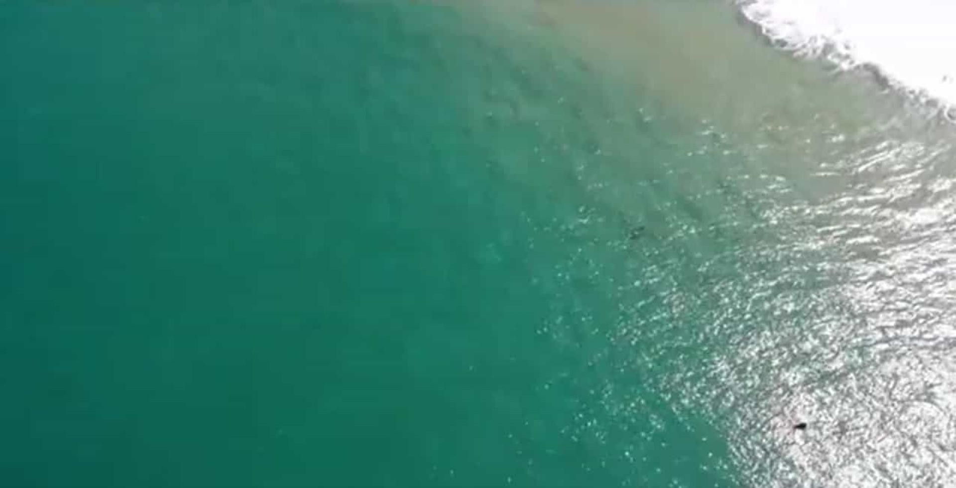 Drone filma tubarão a aproximar-se de surfista (e salva-lhe a vida)
