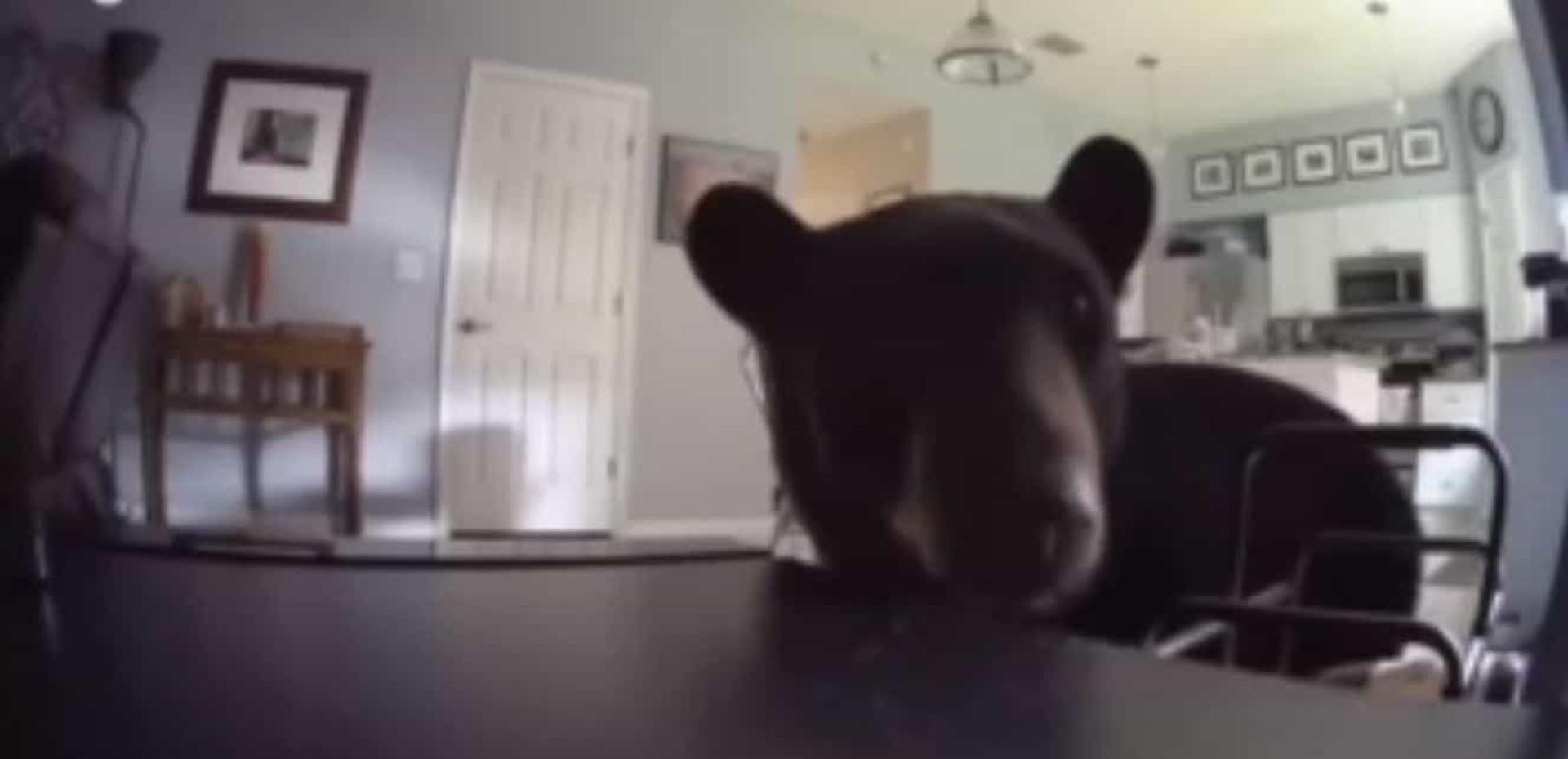 Momento em que urso entra numa casa na Florida por porta de correr