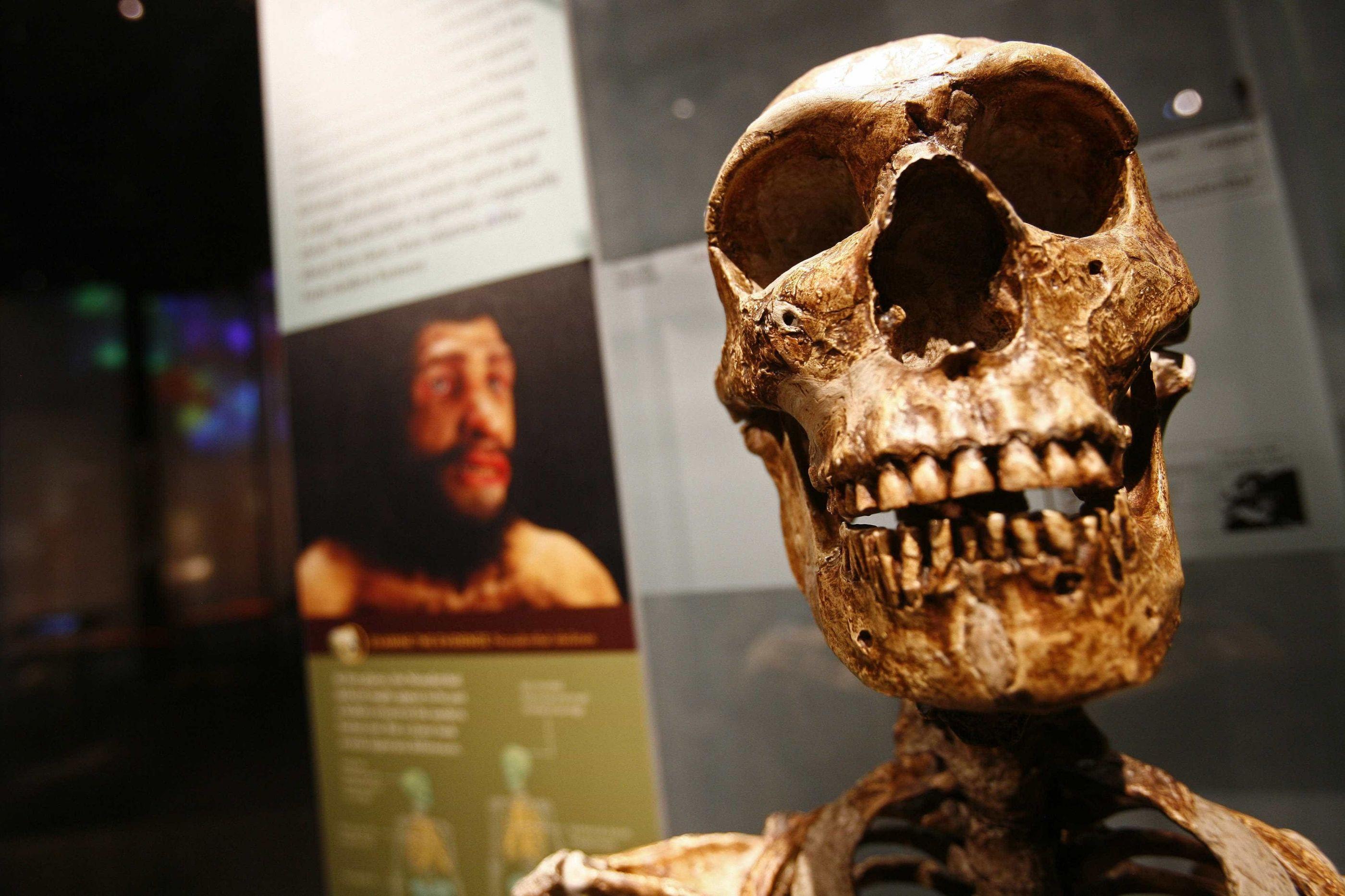 Crianças neandertais do sul de França foram expostas a chumbo tóxico