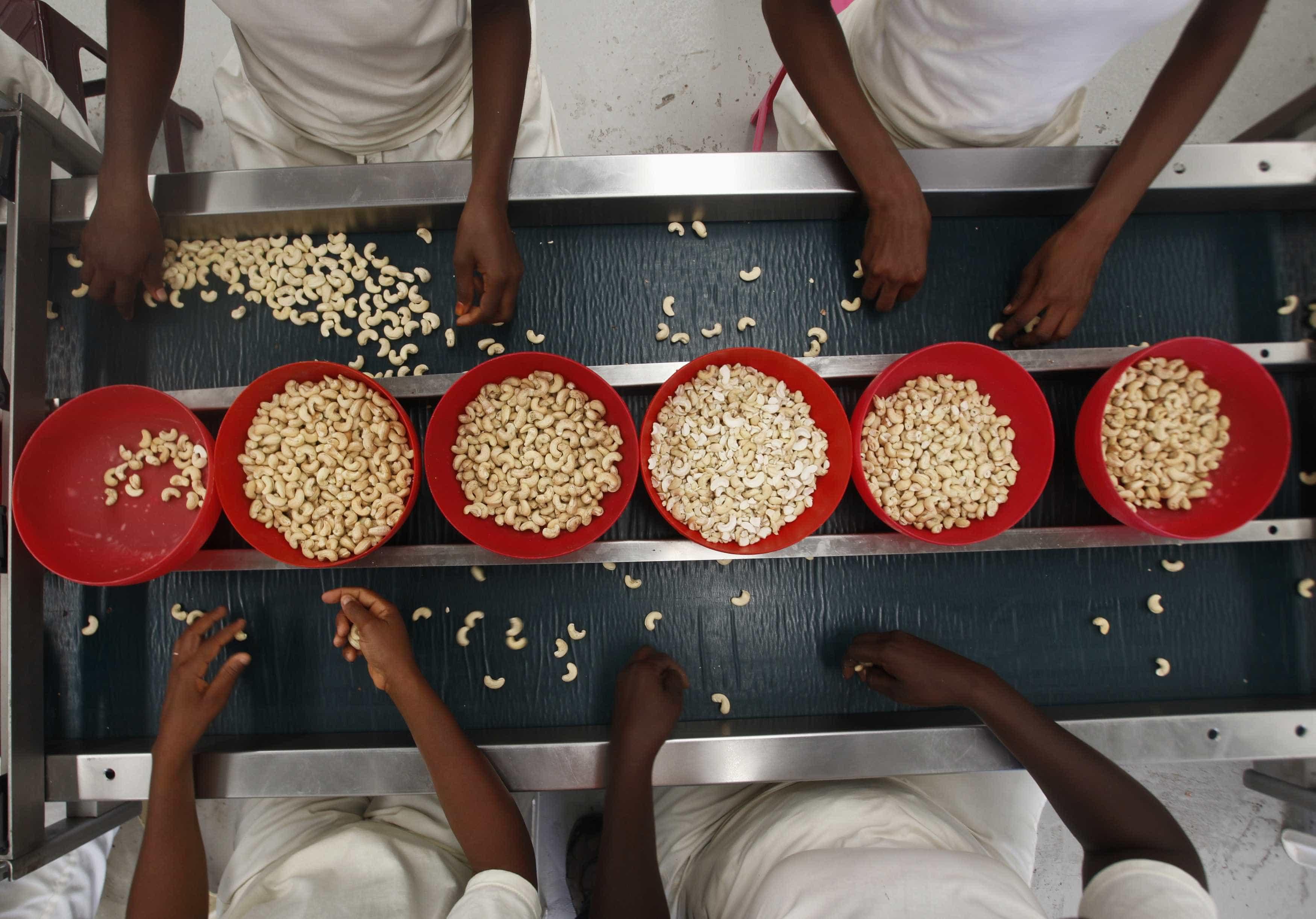 Exército da Tanzânia comprou toda a produção nacional da castanha de caju