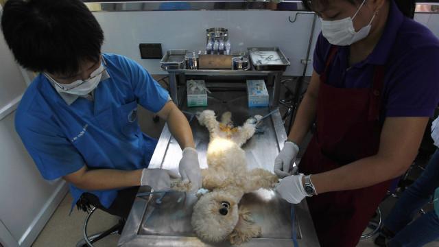 Greve de veterinários e inspetores sanitários com adesão de 50%