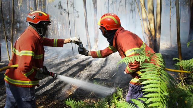 Incêndio em Castelo Branco combatido por cinco meios aéreos