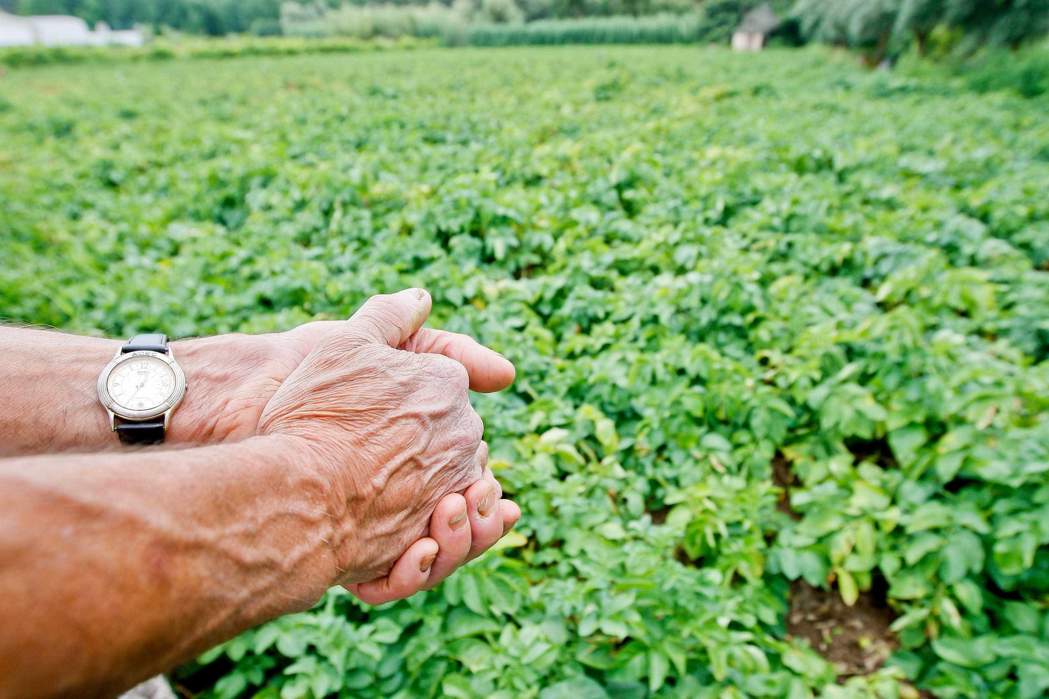 Ministério da Agricultura paga 97 milhões aos agricultores