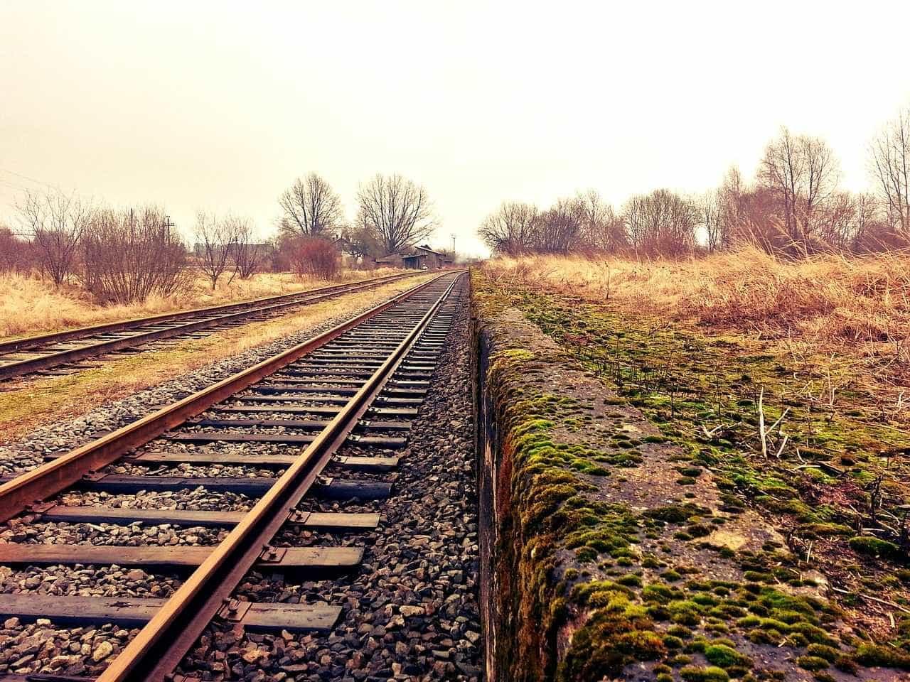 Linha de comboio interrompida devido a atropelamento mortal em Abrantes