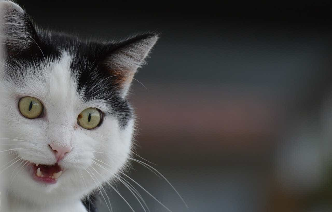 Morreram 23 gatos no incêndio em Oeiras