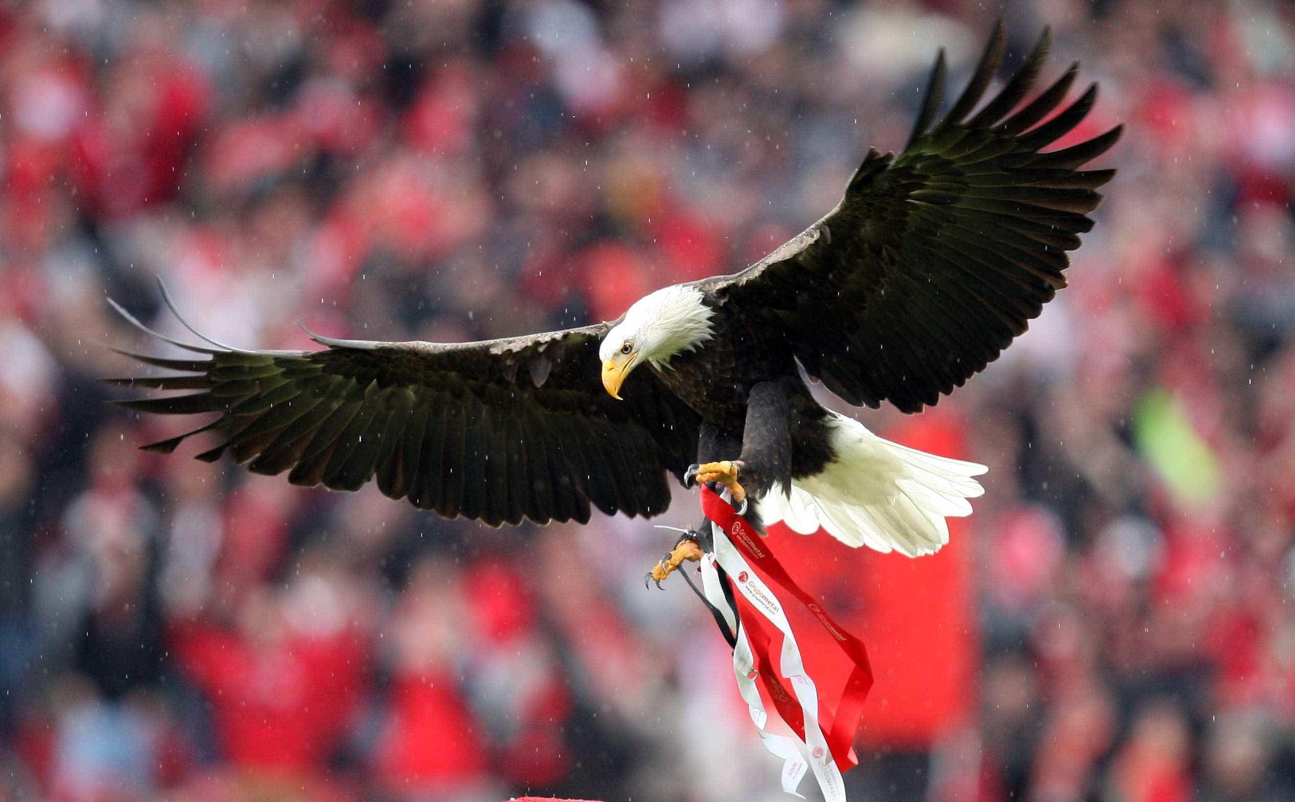 Vitória na primeira mão dos quartos 'anima' ações da SAD do Benfica