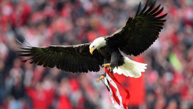 """""""Não podemos ter animais, mas uma águia pode voar no Estádio da Luz"""""""