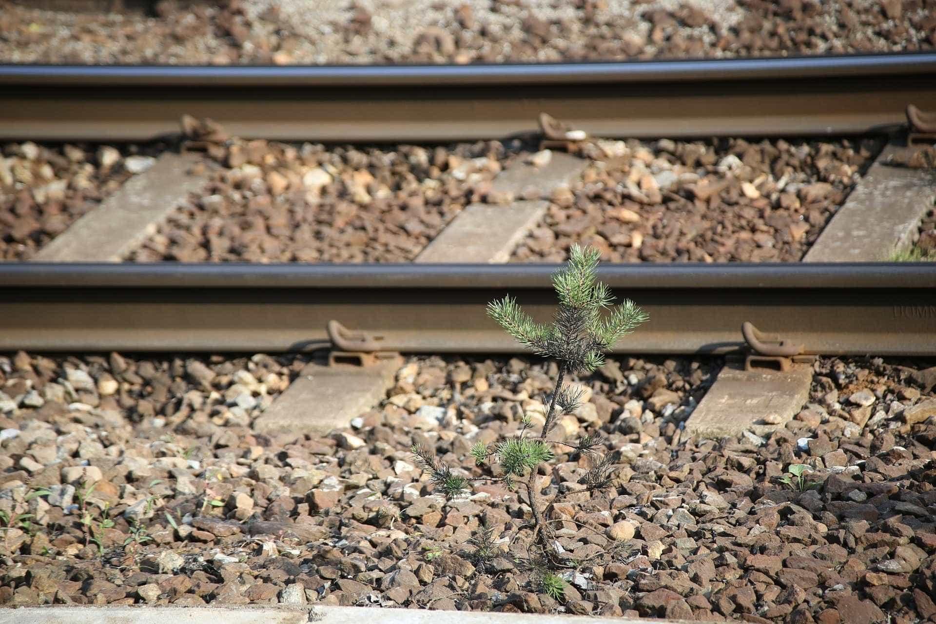 Mulher colhida mortalmente por comboio. Linha do Minho cortada